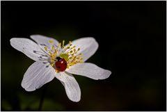 Kleiner Käfer auf Entdeckungstour
