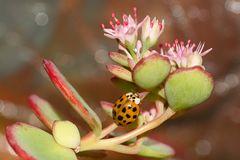 Kleiner Käfer auf Erkundungsgang
