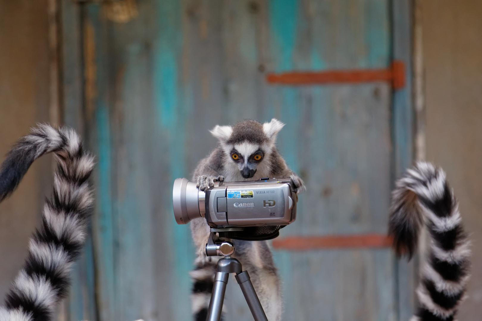 Kleiner Kameramann