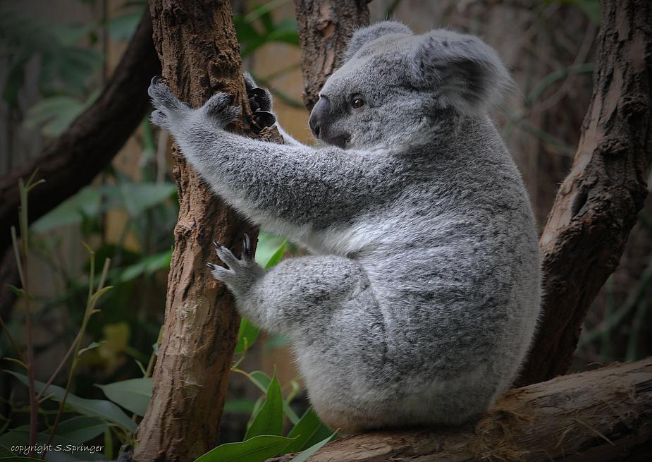 kleiner Koala bist Du wach....?