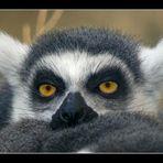 Kleiner Kobold