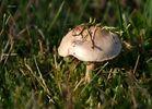 Kleiner Pilz....