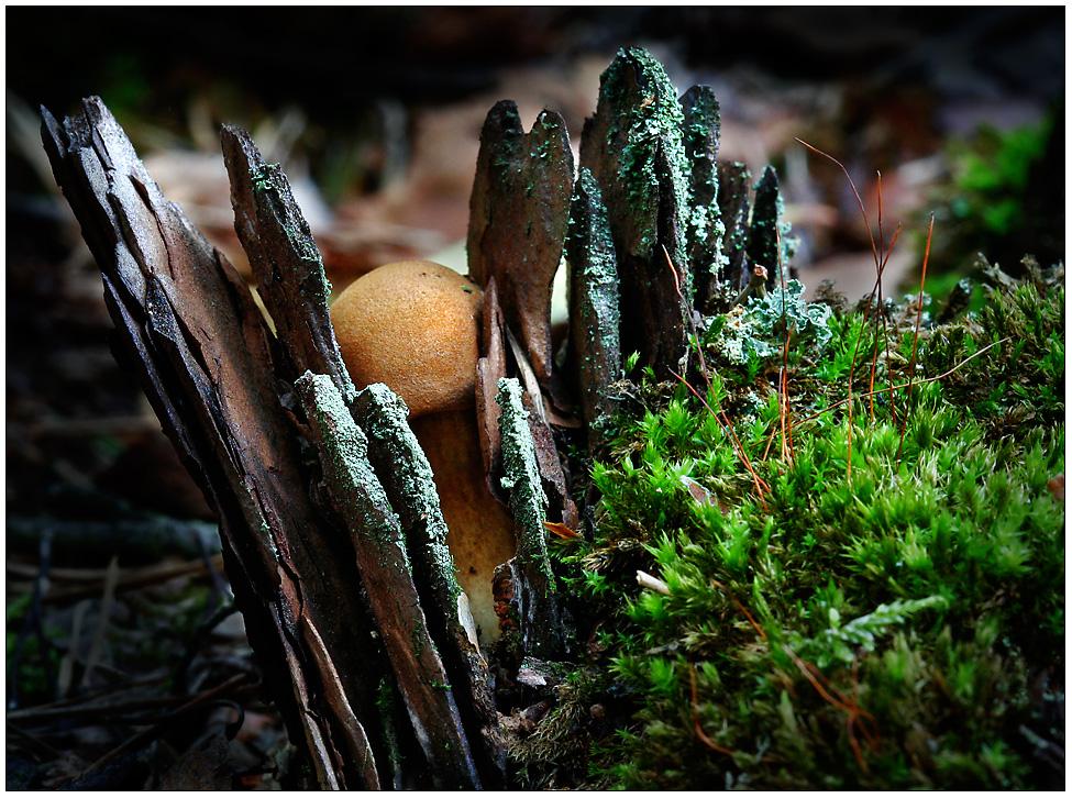 Kleiner Pilz in großer Bedrängnis