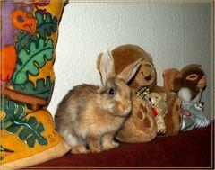 Kleiner Plüsch-Hase