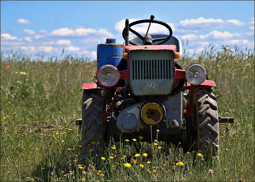 kleiner roter traktor foto  bild  sommer wiese