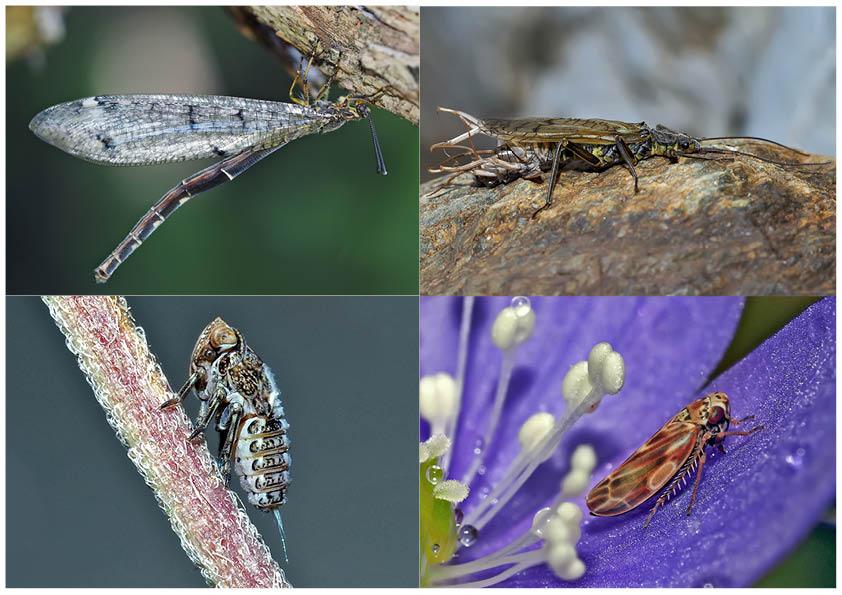 Kleiner Rückblick in meine Insektenwelt. (1) - Un regard en arrière dans le monde de mes insectes.