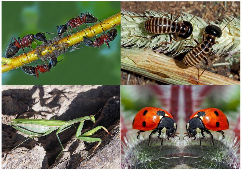 Kleiner Rückblick in meine Insektenwelt. (10) - Un regard en arrière dans le monde de mes insectes.