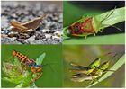 Kleiner Rückblick in meine Insektenwelt. (11) - Un regard en arrière dans le monde de mes insectes.