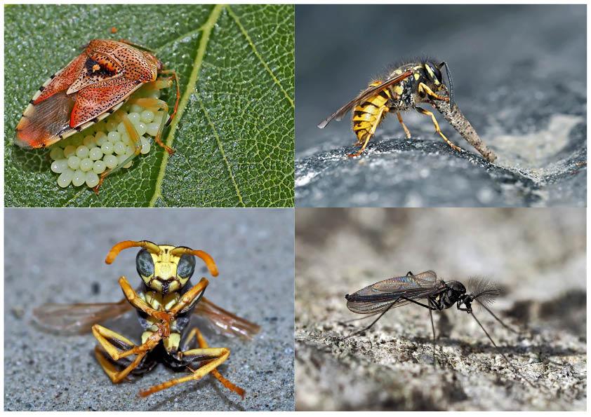Kleiner Rückblick in meine Insektenwelt. (12) - Un regard en arrière dans le monde de mes insectes.