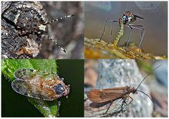 Kleiner Rückblick in meine Insektenwelt. (13) - Un regard en arrière dans le monde de mes insectes.