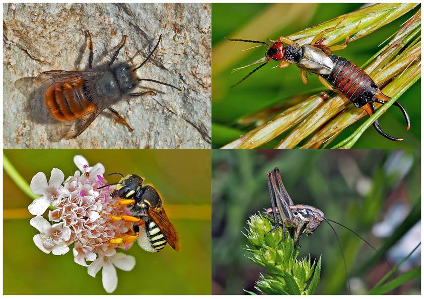 Kleiner Rückblick in meine Insektenwelt. (14) - Un regard en arrière dans le monde de mes insectes.