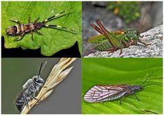 Kleiner Rückblick in meine Insektenwelt. (15) - Un regard en arrière dans le monde de mes insectes.