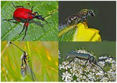 Kleiner Rückblick in meine Insektenwelt. (16) - Un regard en arrière dans le monde de mes insectes.