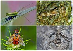 Kleiner Rückblick in meine Insektenwelt. (17) - Un regard en arrière dans le monde de mes insectes.