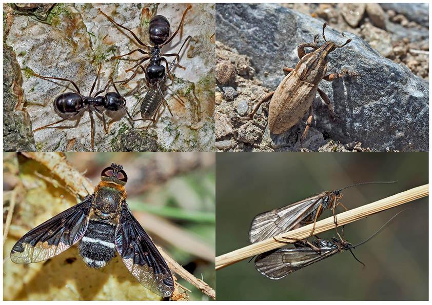 Kleiner Rückblick in meine Insektenwelt. (18) - Un regard en arrière dans le monde de mes insectes.