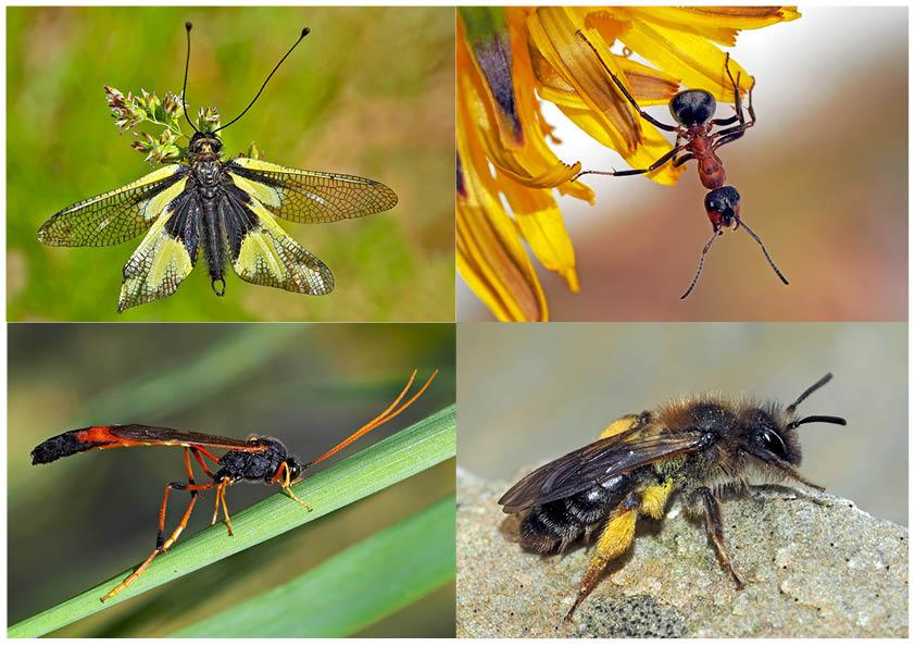 Kleiner Rückblick in meine Insektenwelt... (2) - Un regard en arrière dans le monde de mes insectes.
