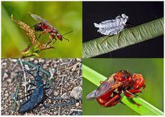 Kleiner Rückblick in meine Insektenwelt. (20) - Un regard en arrière dans le monde de mes insectes.