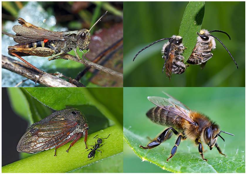 Kleiner Rückblick in meine Insektenwelt... (3) - Un regard en arrière dans le monde de mes insectes.
