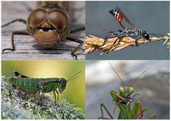Kleiner Rückblick in meine Insektenwelt... (4) - Un regard en arrière dans le monde de mes insectes.