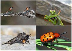 Kleiner Rückblick in meine Insektenwelt... (5) - Un regard en arrière dans le monde de mes insectes.
