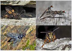 Kleiner Rückblick in meine Insektenwelt. (6) - Un regard en arrière dans le monde de mes insectes.