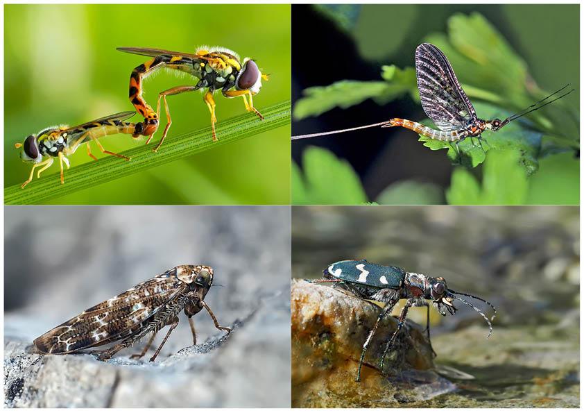 Kleiner Rückblick in meine Insektenwelt... (7) - Un regard en arrière dans le monde de mes insectes.