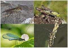 Kleiner Rückblick in meine Insektenwelt... (8) - Un regard en arrière dans le monde de mes insectes.