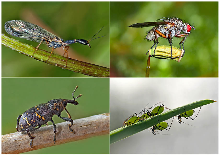 Kleiner Rückblick in meine Insektenwelt... (9) - Un regard en arrière dans le monde de mes insectes.