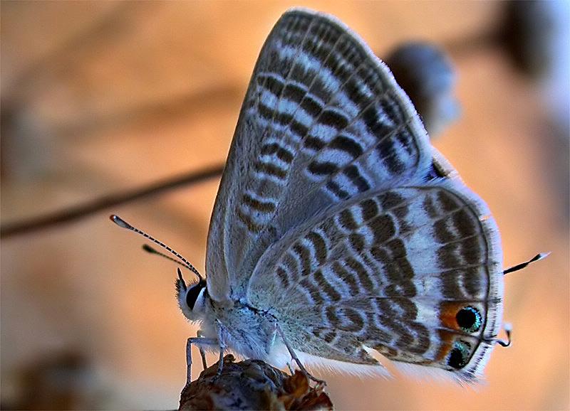 kleiner Schmetterling in der griechischen Abendsonne