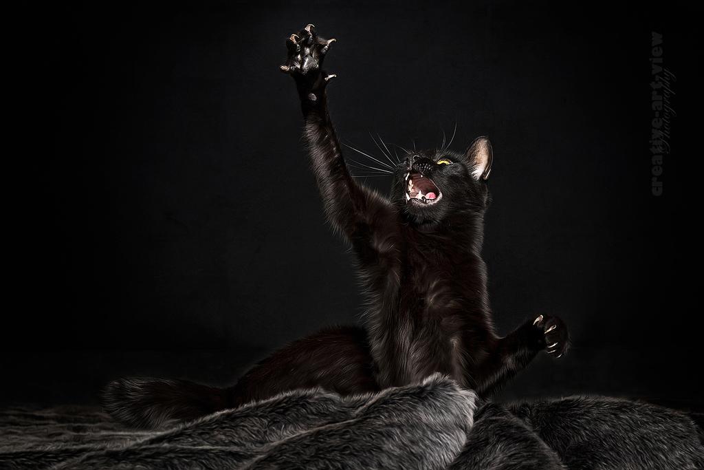Kleiner schwarzer Panther