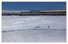 Kleiner See-Hund so ganz alleine auf See-Gang... (1. Bild der Serie)