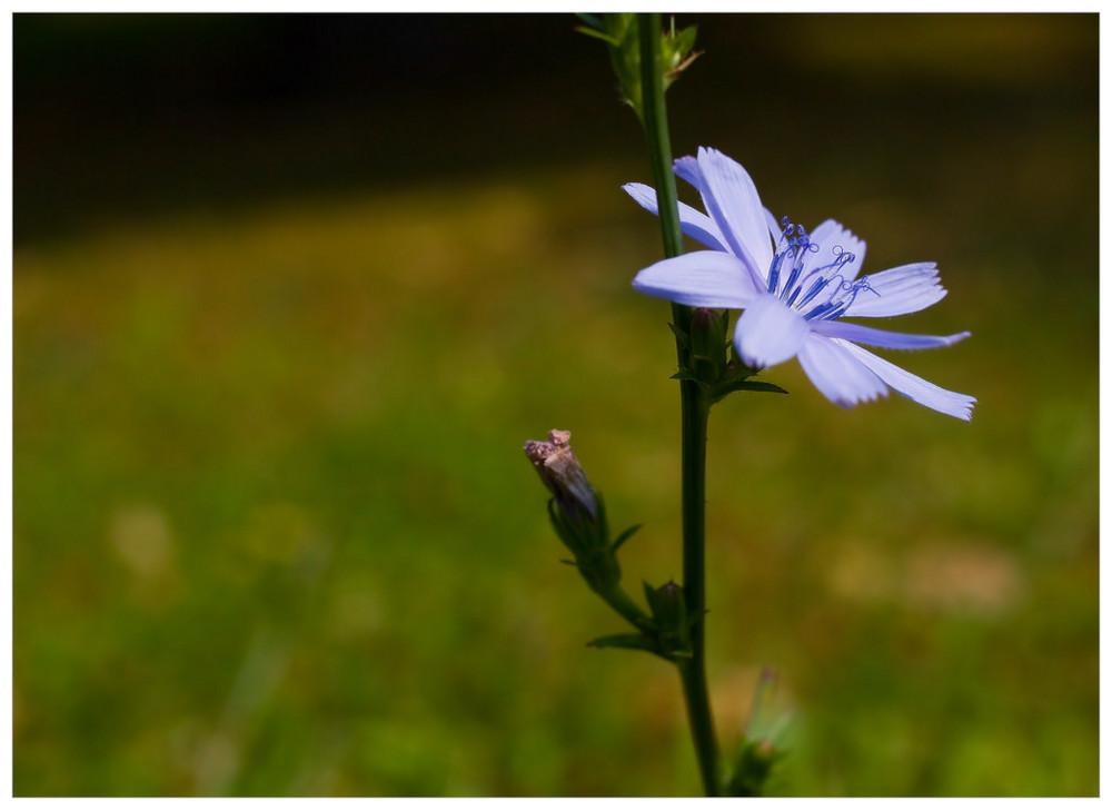 Kleiner Sommerblüher