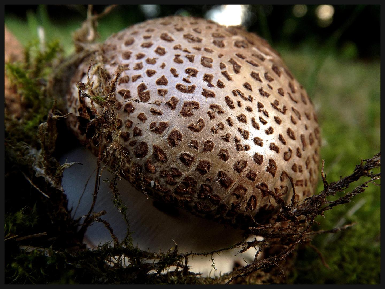Kleiner, süßer Pilz