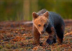"""Kleiner """"Teddybär"""""""