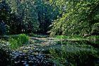Kleiner Teich im Grünen