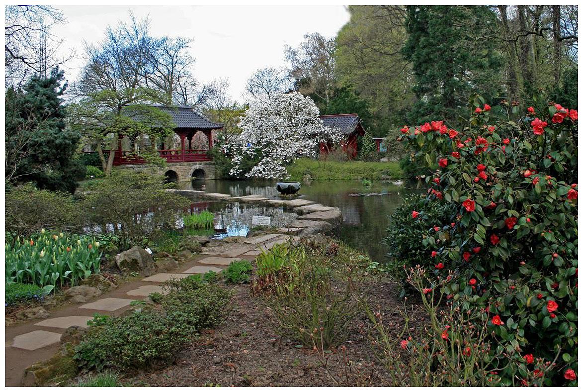 kleiner Teich im japanischen Garten in Leverkusen