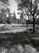 Kleiner Wald Weg mit Bäumen.