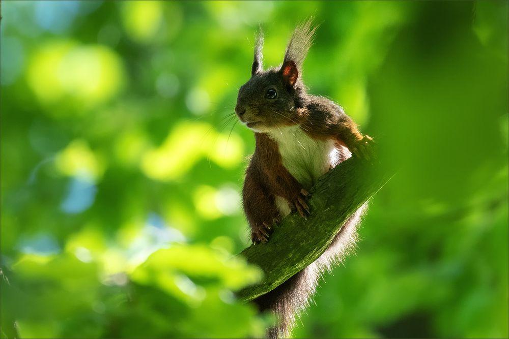 Kleiner Waldkobold ...