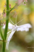 Kleiner weißer Engel