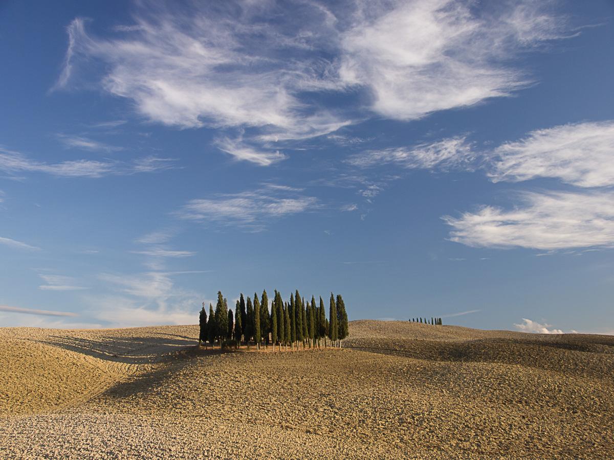 kleiner Zypressenwald in der Toscana