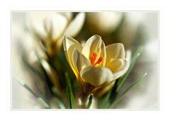 kleines Frühlingszeichen