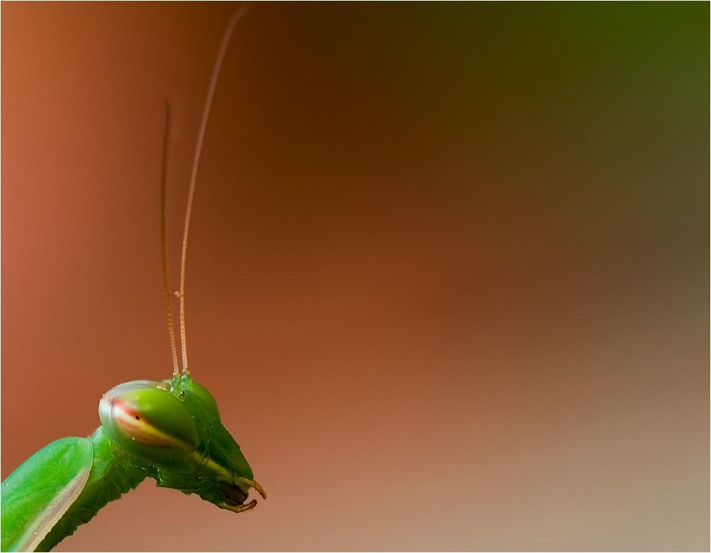 kleines grünes Männchen ...