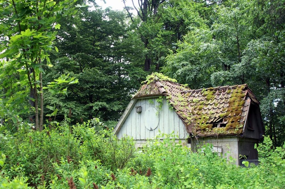 kleines haus am wald wird renaturiert foto bild landschaft r ckkehr der natur landschaften. Black Bedroom Furniture Sets. Home Design Ideas