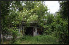 ...Kleines Haus im Wald...