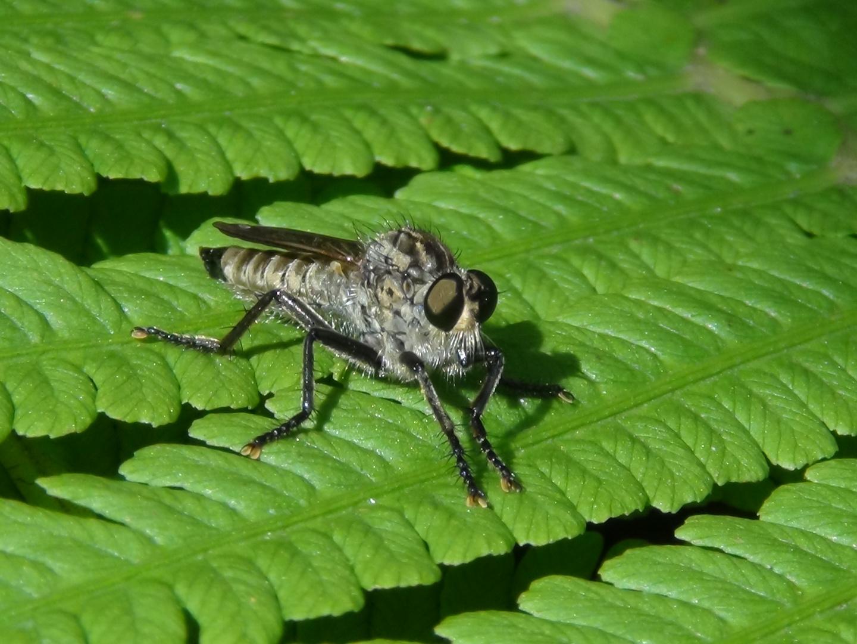 Kleines Insekt