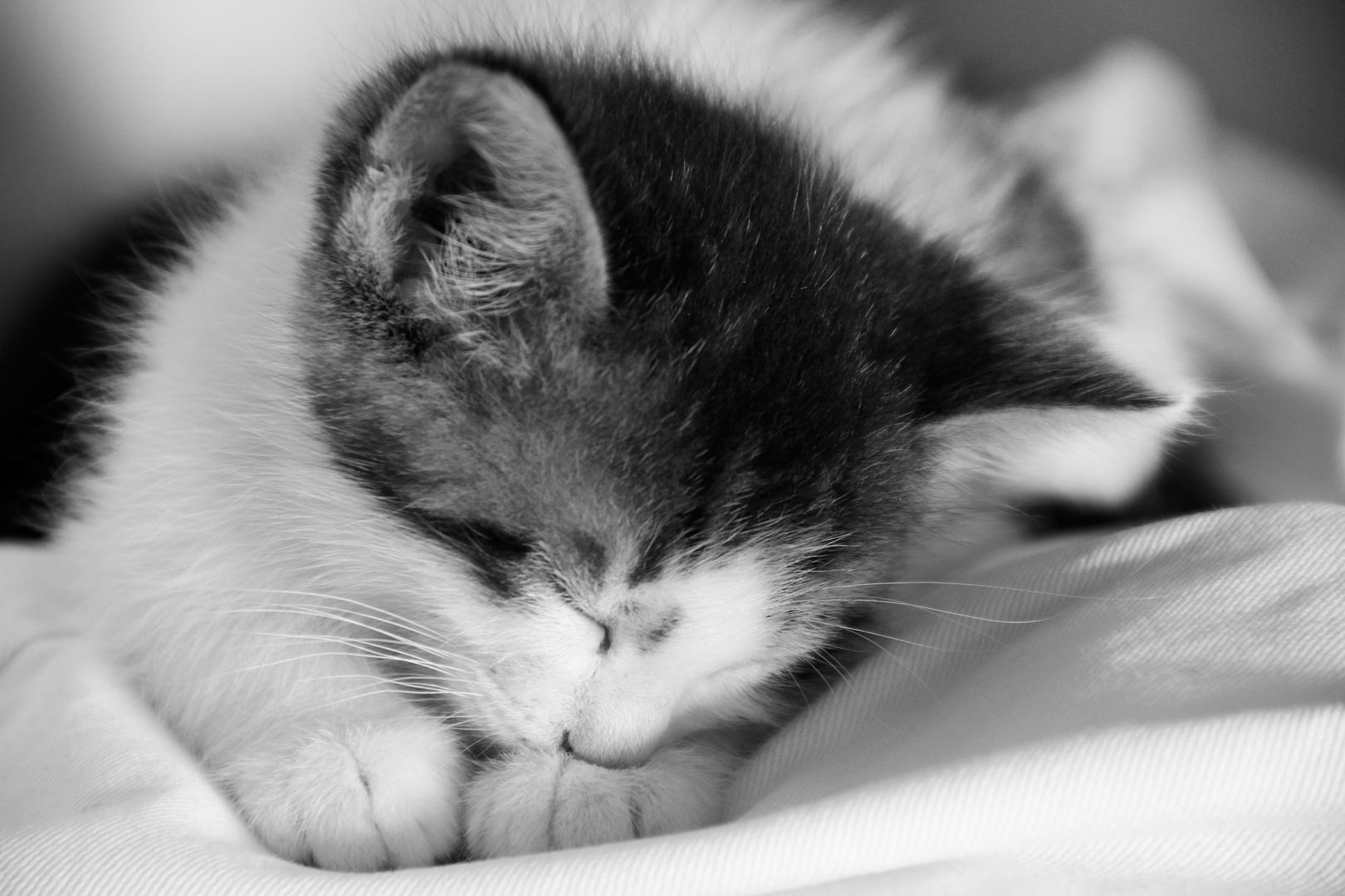 """kleines Kätzchen """"Emil"""""""