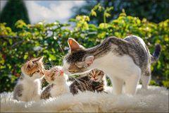 Kleines Katzen ...