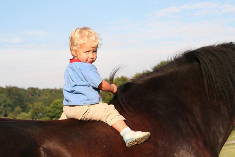 kleines mädchen großes pferd foto  bild  kinder
