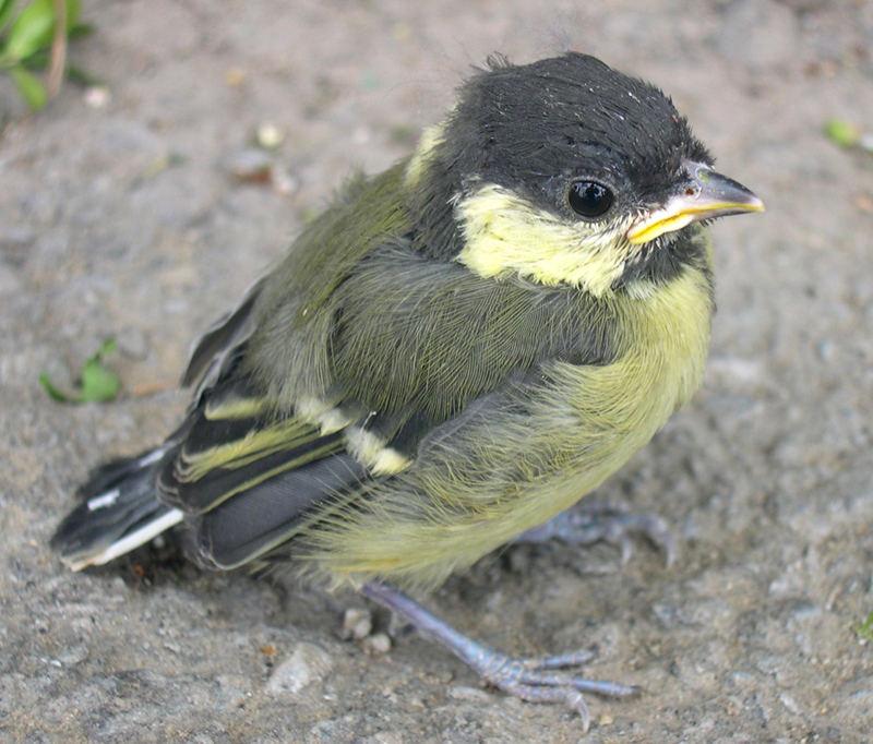 Kleines Vögelchen