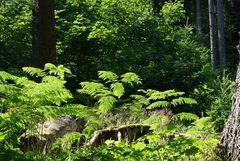Kleines Waldstück
